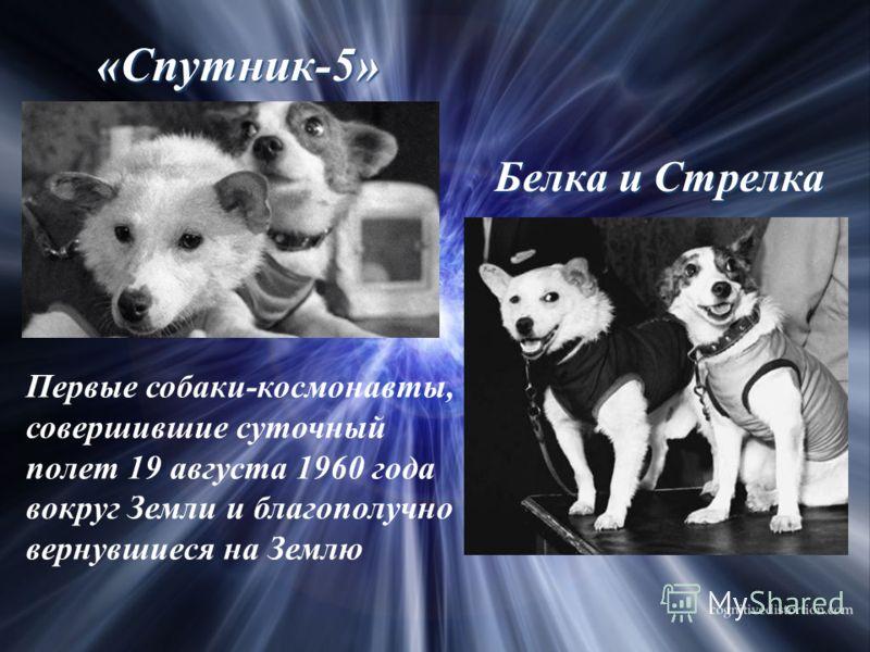 Белка и Стрелка Первые собаки-космонавты, совершившие суточный полет 19 августа 1960 года вокруг Земли и благополучно вернувшиеся на Землю «Спутник-5»