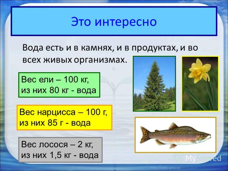 Это интересно Вода есть и в камнях, и в продуктах, и во всех живых организмах. Вес ели – 100 кг, из них 80 кг - вода Вес нарцисса – 100 г, из них 85 г - вода Вес лосося – 2 кг, из них 1,5 кг - вода