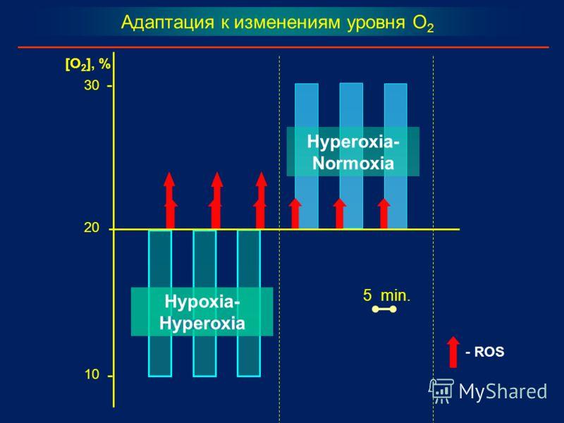 5 min. 20 30 10 [O 2 ], % Адаптация к изменениям уровня O 2 Hypoxia- Normoxia Hyperoxia- Normoxia Hypoxia- Hyperoxia - ROS