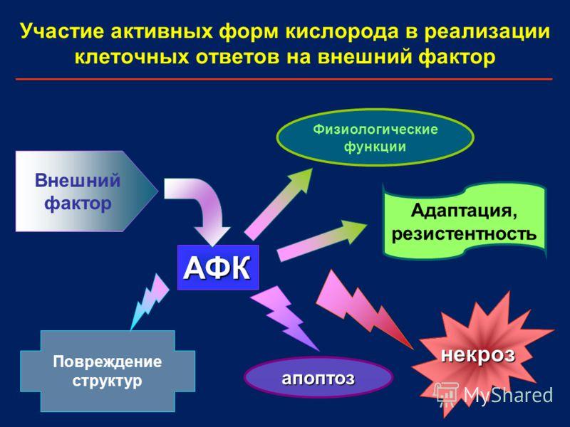 Участие активных форм кислорода в реализации клеточных ответов на внешний фактор некроз Адаптация, резистентность Внешний фактор АФК апоптоз Повреждение структур Физиологические функции