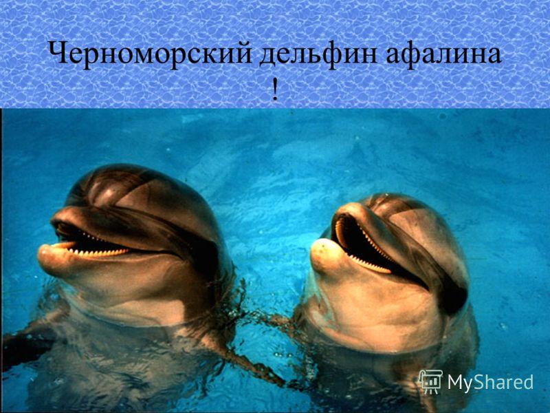 Черноморский дельфин афалина !