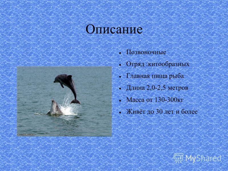 Описание Позвоночные Отряд :китообразных Главная пища рыба Длина 2,0-2,5 метров Масса от 130-300кг Живёт до 30 лет и более