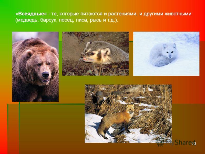 10 «Всеядные» - те, которые питаются и растениями, и другими животными (медведь, барсук, песец, лиса, рысь и т.д.).
