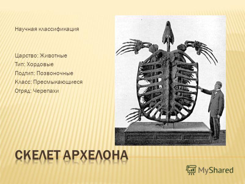 Научная классификация Царство: Животные Тип: Хордовые Подтип: Позвоночные Класс: Пресмыкающиеся Отряд: Черепахи