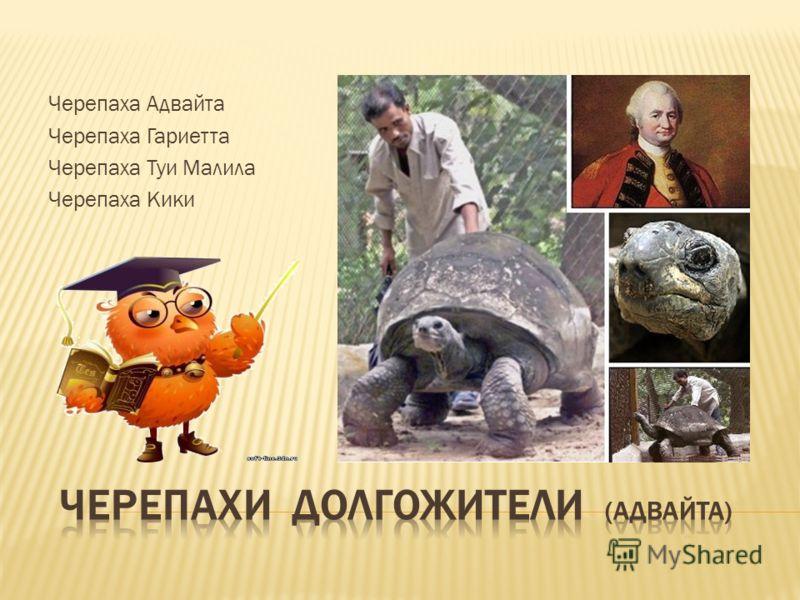 Черепаха Адвайта Черепаха Гариетта Черепаха Туи Малила Черепаха Кики