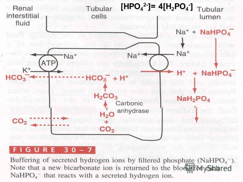 [HPO 4 2- ]= 4[H 2 PO 4 - ]
