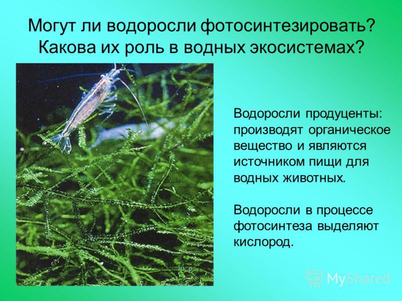Могут ли водоросли фотосинтезировать? Какова их роль в водных экосистемах? Водоросли продуценты: производят органическое вещество и являются источником пищи для водных животных. Водоросли в процессе фотосинтеза выделяют кислород.