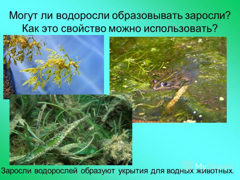 Могут ли водоросли образовывать заросли? Как это свойство можно использовать? Заросли водорослей образуют укрытия для водных животных.