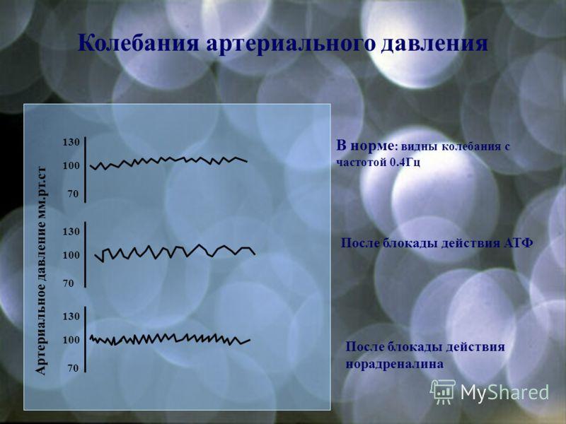Влияние блокаторов на рефлекторную регуляцию АД До введения блокаторов После блокады действия норадреналина После блокады двух медиаторов (норадреналина и АТФ)