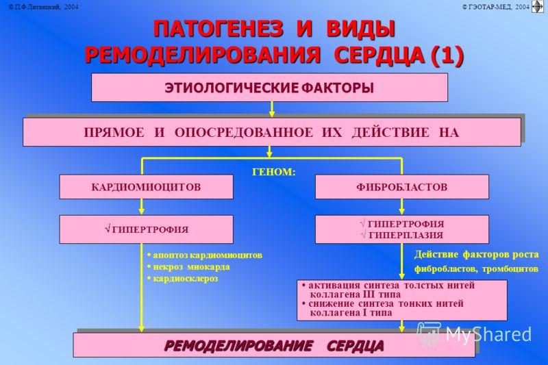 © П.Ф.Литвицкий, 2004 © ГЭОТАР-МЕД, 2004 ПАТОГЕНЕЗ И ВИДЫ РЕМОДЕЛИРОВАНИЯ СЕРДЦА (1) ЭТИОЛОГИЧЕСКИЕ ФАКТОРЫ КАРДИОМИОЦИТОВФИБРОБЛАСТОВ РЕМОДЕЛИРОВАНИЕ СЕРДЦА активация синтеза толстых нитей коллагена III типа снижение синтеза тонких нитей коллагена I