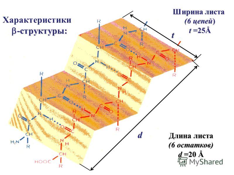 t d Длина листа (6 остатков) d =20 Å Ширина листа (6 цепей) t =25Å Характеристики -структуры: -структуры: