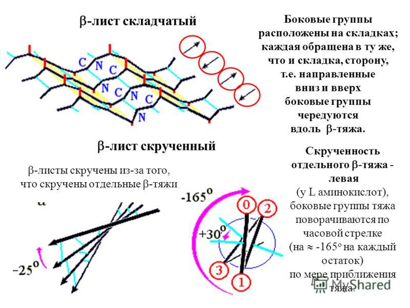 -лист складчатый -лист скрученный -листы скручены из-за того, что скручены отдельные -тяжи Скрученность отдельного -тяжа - левая (у L аминокислот), боковые группы тяжа поворачиваются по часовой стрелке (на -165 o на каждый остаток) по мере приближени