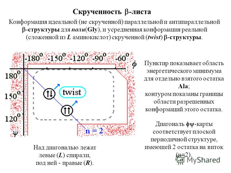 Конформация идеальной (не скрученной) параллельной и антипараллельной -структуры для поли(Gly), и усредненная конформация реальной (сложенной из L аминокислот) скрученной (twist) -структуры. Скрученность -листа Пунктир показывает область энергетическ