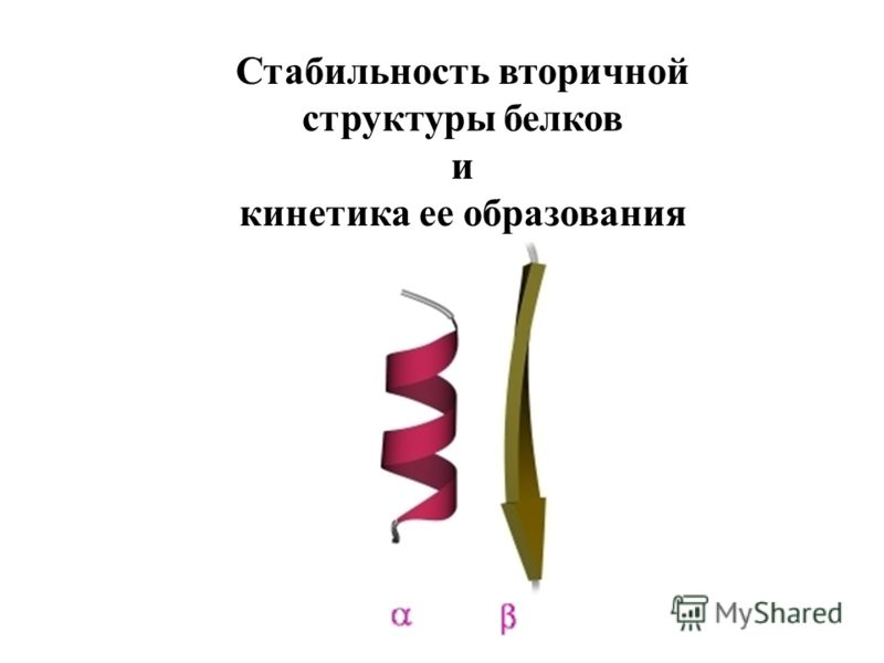 Стабильность вторичной структуры белков и кинетика ее образования