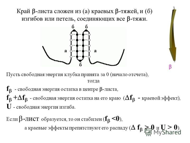 Пусть свободная энергия клубка принята за 0 (начало отсчета), тогда f - свободная энергия остатка в центре -листа, f + f - свободная энергия остатка на его краю ( f - краевой эффект), U - свободная энергия изгиба. Если -лист образуется, то он стабиле