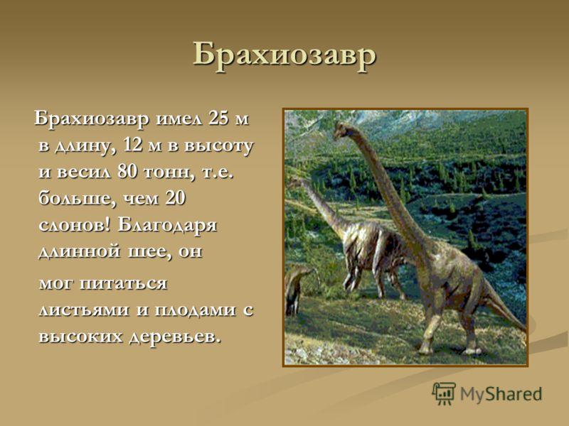 Брахиозавр Брахиозавр имел 25 м в длину, 12 м в высоту и весил 80 тонн, т.е. больше, чем 20 слонов! Благодаря длинной шее, он Брахиозавр имел 25 м в длину, 12 м в высоту и весил 80 тонн, т.е. больше, чем 20 слонов! Благодаря длинной шее, он мог питат