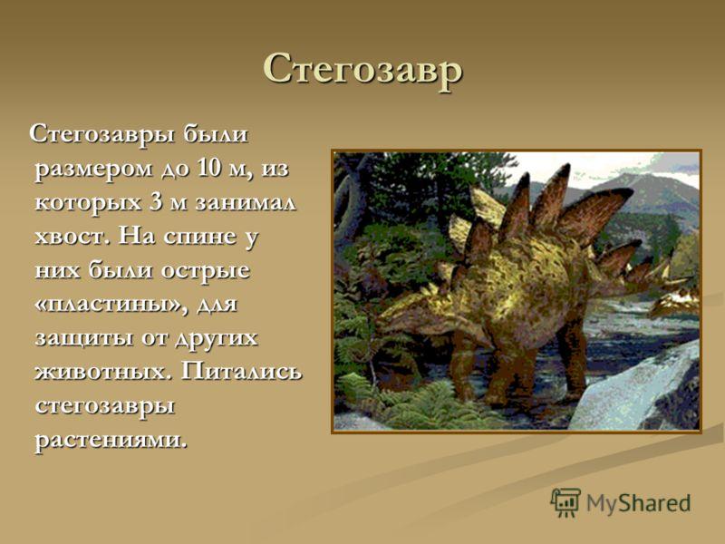 Стегозавр Стегозавры были размером до 10 м, из которых 3 м занимал хвост. На спине у них были острые «пластины», для защиты от других животных. Питались стегозавры растениями. Стегозавры были размером до 10 м, из которых 3 м занимал хвост. На спине у