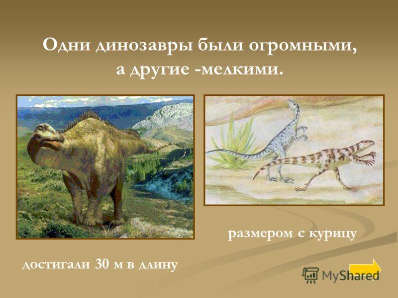 Одни динозавры были огромными, а другие -мелкими. достигали 30 м в длину размером с курицу