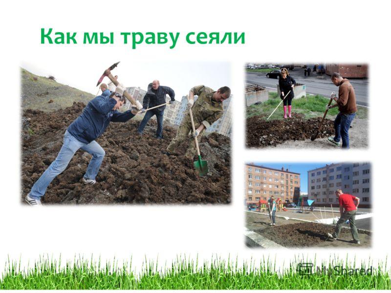 Как мы траву сеяли