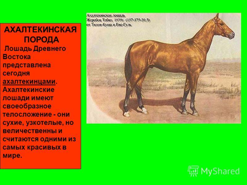 История зарождения отношений человека и лошади Предки современной лошади. ТАРПАН Предок домашней лошади - тарпан, который еще не так давно обитал в южных русских степях. Обуздать и приручить их не удавалось. Последний дикий тарпан погиб в конце 80-х