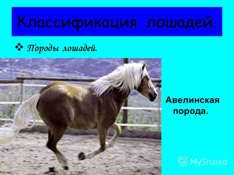 В средневековой Европе лошади также играли важную роль на войне. Вывели более крупные и тяжелые породы коней, чтобы они выдерживали рыцарей в доспехах с оружием. В XI-XII столетиях европейцы начали использовать лошадей в сельском хозяйстве. Постепенн