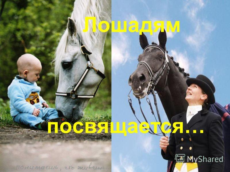 Человек и лошадь… Вечный союз.