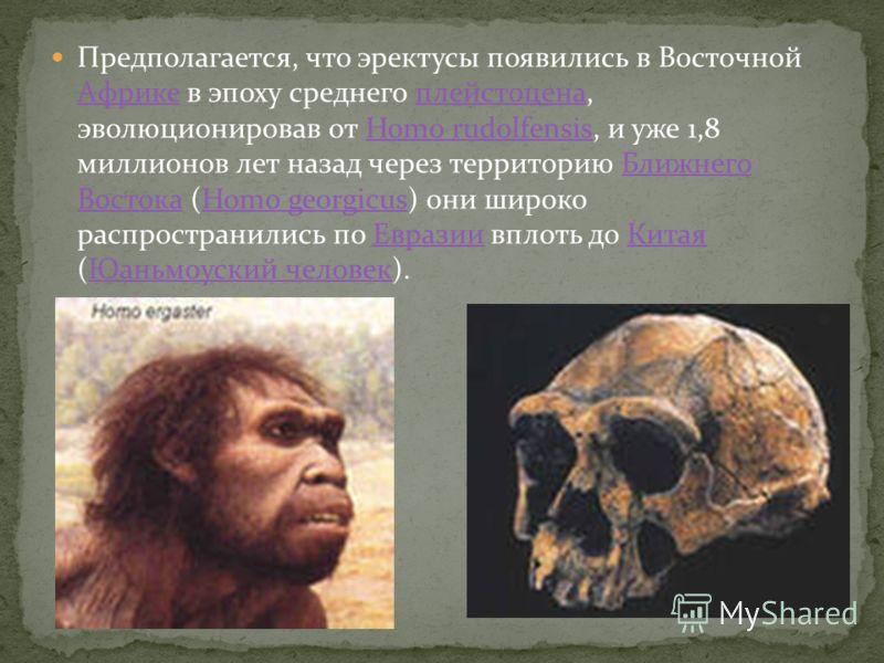 Предполагается, что эректусы появились в Восточной Африке в эпоху среднего плейстоцена, эволюционировав от Homo rudolfensis, и уже 1,8 миллионов лет назад через территорию Ближнего Востока (Homo georgicus) они широко распространились по Евразии вплот