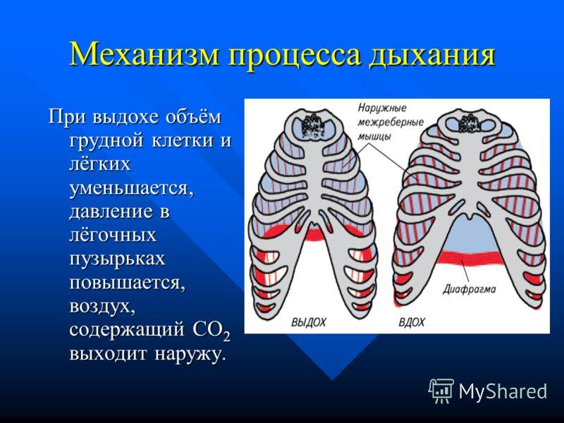 Механизм процесса дыхания При выдохе объём грудной клетки и лёгких уменьшается, давление в лёгочных пузырьках повышается, воздух, содержащий CO 2 выходит наружу.