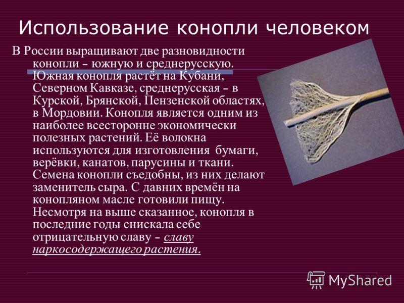 Использование конопли человеком В России выращивают две разновидности конопли – южную и среднерусскую. Южная конопля растёт на Кубани, Северном Кавказе, среднерусская – в Курской, Брянской, Пензенской областях, в Мордовии. Конопля является одним из н