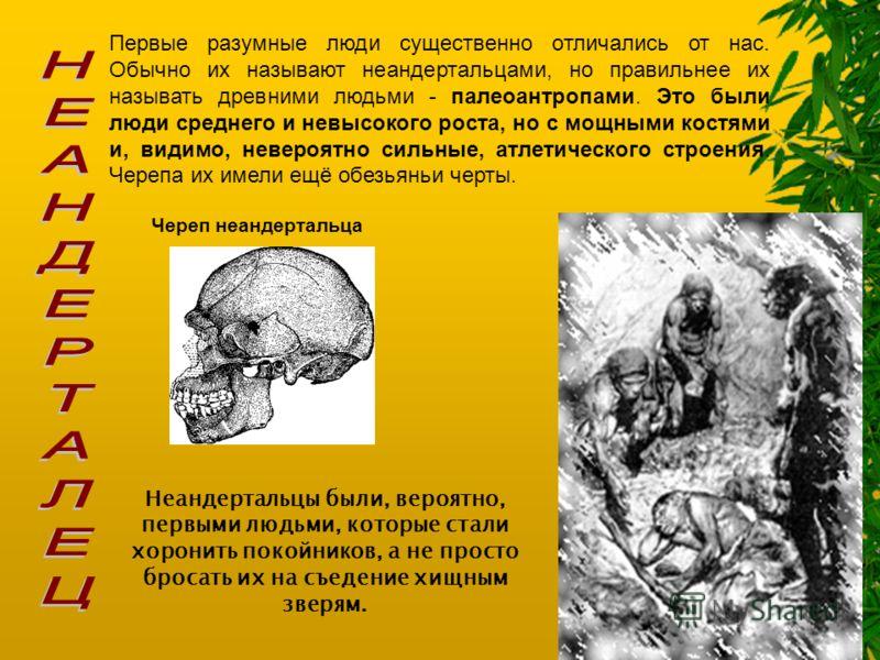 Первые разумные люди существенно отличались от нас. Обычно их называют неандертальцами, но правильнее их называть древними людьми - палеоантропами. Это были люди среднего и невысокого роста, но с мощными костями и, видимо, невероятно сильные, атлетич