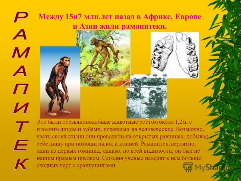 Между 15и7 млн.лет назад в Африке, Европе и Азии жили рамапитеки. Это были обезьяноподобные животные ростом около 1,2м, с плоским лицом и зубами, похожими на человеческие. Возможно, часть своей жизни они проводили на открытых равнинах, добывая себе п
