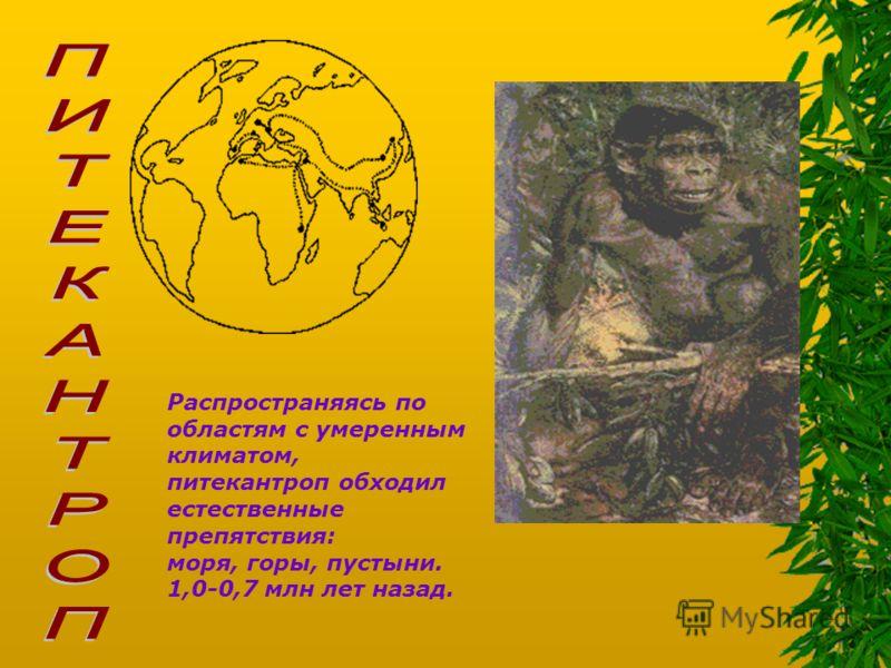 Распространяясь по областям с умеренным климатом, питекантроп обходил естественные препятствия: моря, горы, пустыни. 1,0-0,7 млн лет назад.