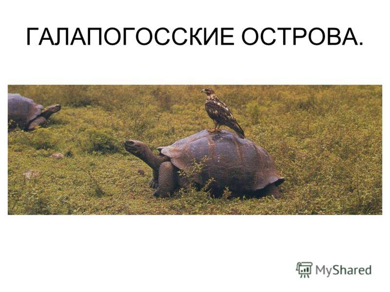 ГАЛАПОГОССКИЕ ОСТРОВА.