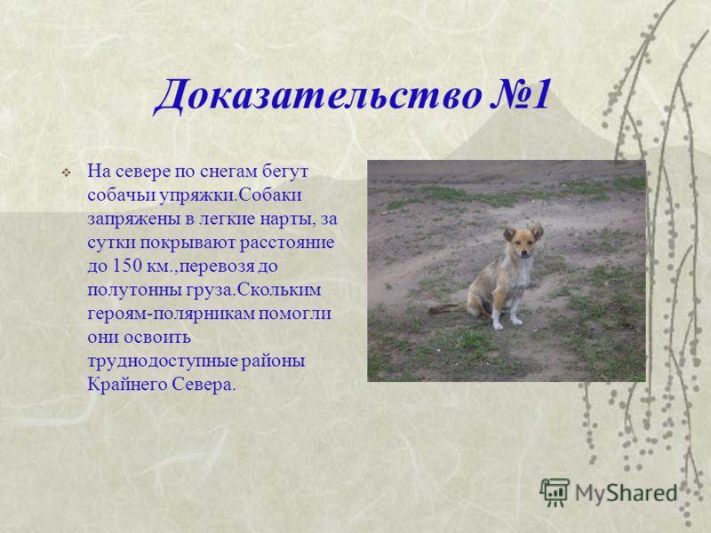 Цель:Доказать, что собака друг человека.