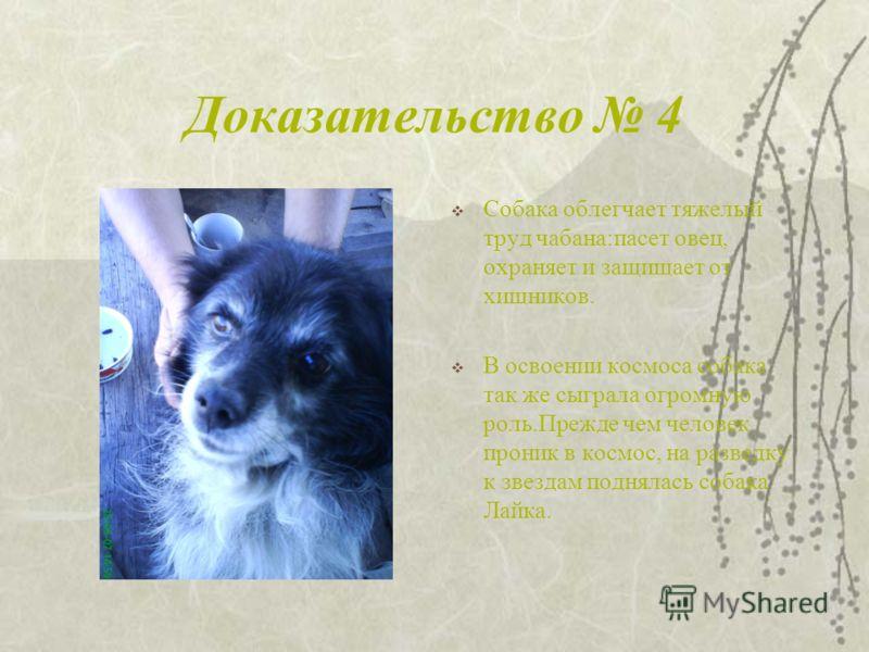 Доказательство 3 Человеку, потерявшему зрение, собака заменяет глаза:приводит на работу и домой, оберегает его в пути.Всероссийское общество слепых имеет под Москвой специальную школу, в которой обучают собак- поводырей.