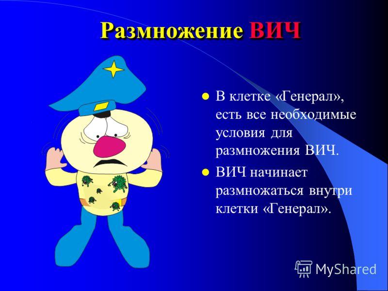 Внедрение ВИЧ в клетку Рецепторы ВИЧ подходят к поверхности клетки «Генерал» (как ключ к замку который с лёгкостью его и открывает). Поэтому ВИЧ беспрепятственно внедряется в клетку.