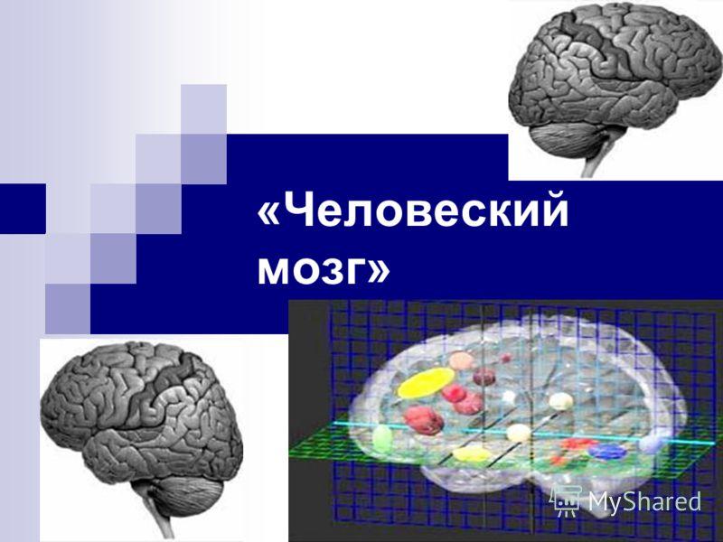 «Человеский мозг»