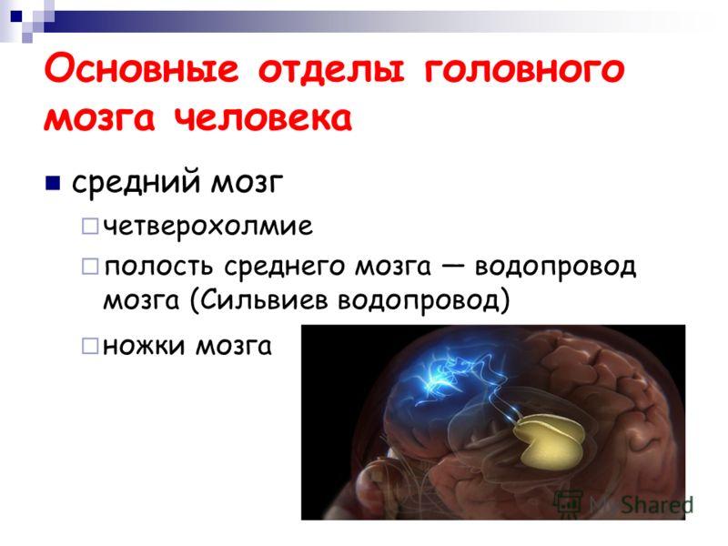 Основные отделы головного мозга человека средний мозг четверохолмие полость среднего мозга водопровод мозга (Сильвиев водопровод) ножки мозга