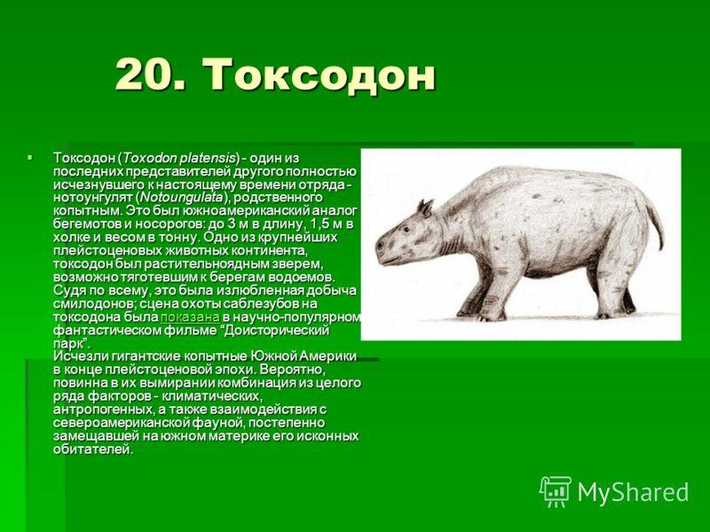 20. Токсодон 20. Токсодон Токсодон (Toxodon platensis) - один из последних представителей другого полностью исчезнувшего к настоящему времени отряда - нотоунгулят (Notoungulata), родственного копытным. Это был южноамериканский аналог бегемотов и носо