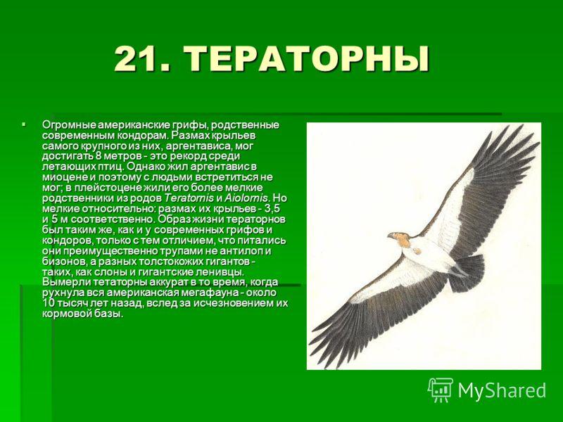 21. ТЕРАТОРНЫ 21. ТЕРАТОРНЫ Огромные американские грифы, родственные современным кондорам. Размах крыльев самого крупного из них, аргентависа, мог достигать 8 метров - это рекорд среди летающих птиц. Однако жил аргентавис в миоцене и поэтому с людьми