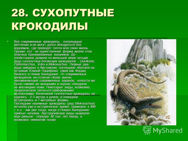 28. СУХОПУТНЫЕ КРОКОДИЛЫ Все современные крокодилы - полуводные рептилии и не могут долго обходиться без водоемов, где проводят почти всю свою жизнь. Однако это - не единственная форма жизни этих опасных бронированных хищников. До плейстоцена дожили