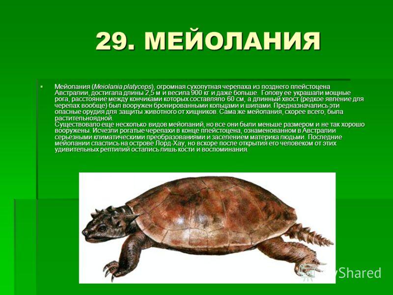 29. МЕЙОЛАНИЯ 29. МЕЙОЛАНИЯ Мейолания (Meiolania platyceps), огромная сухопутная черепаха из позднего плейстоцена Австралии, достигала длины 2,5 м и весила 900 кг и даже больше. Голову ее украшали мощные рога, расстояние между кончиками которых соста