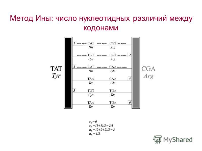 Метод Ины: число нуклеотидных различий между кодонами