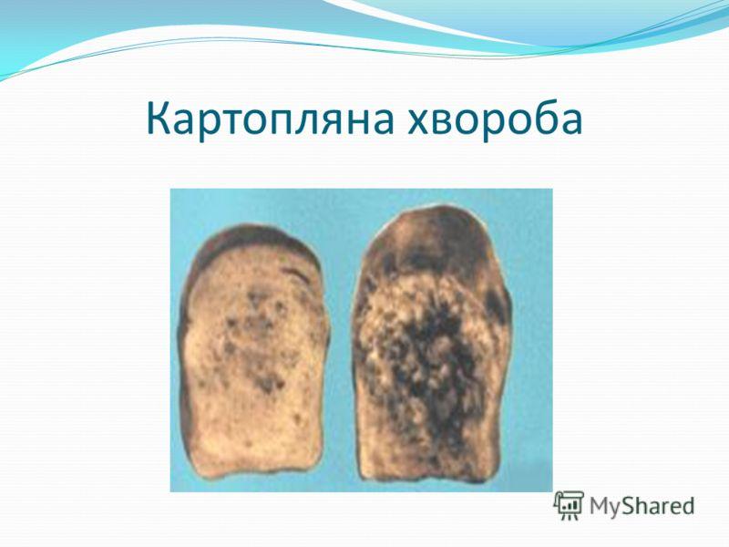 Картопляна хвороба