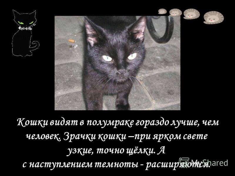 Кошки видят в полумраке гораздо лучше, чем человек. Зрачки кошки –при ярком свете узкие, точно щёлки. А с наступлением темноты - расширяются.