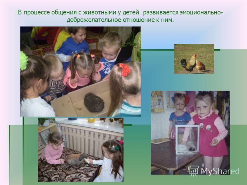 В процессе общения с животными у детей развивается эмоционально- доброжелательное отношение к ним.