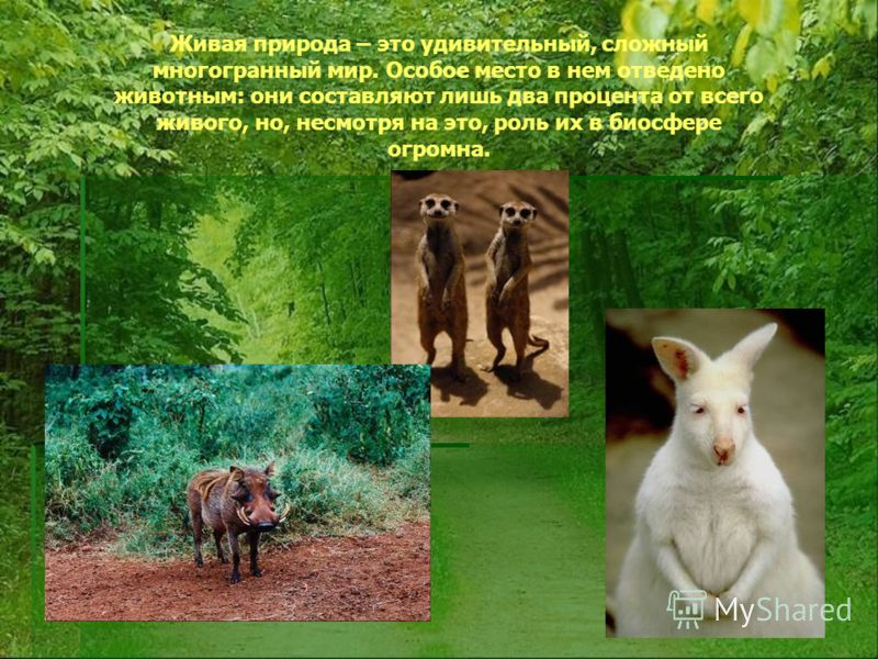 Живая природа – это удивительный, сложный многогранный мир. Особое место в нем отведено животным: они составляют лишь два процента от всего живого, но, несмотря на это, роль их в биосфере огромна.