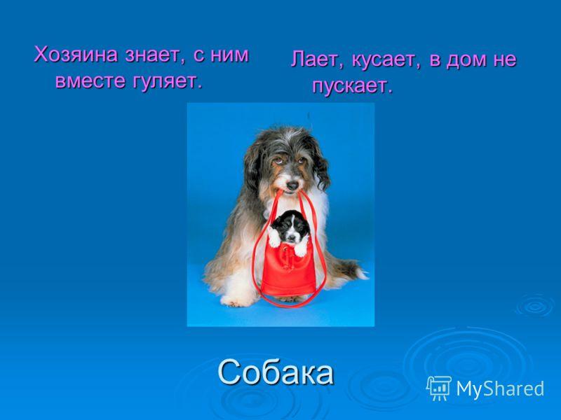 Собака Хозяина знает, с ним вместе гуляет. Лает, кусает, в дом не пускает.