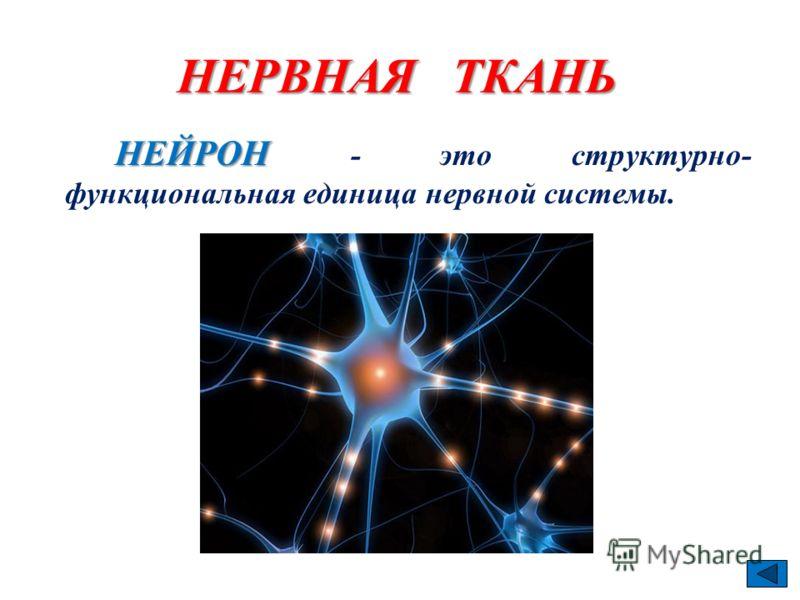 НЕЙРОН НЕЙРОН - это структурно- функциональная единица нервной системы.