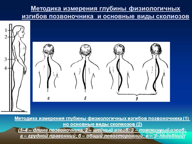 Методика измерения глубины физиологичных изгибов позвоночника и основные виды сколиозов Методика измерения глубины физиологичных изгибов позвоночника (1) но основные виды сколиозов (2) (1–4 – длина позвоночника; 2 – шейный изгиб; 3 – поясничный изгиб